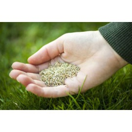 Trawa-nasiona